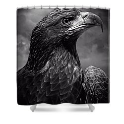 Young Bald Eagle V4 Shower Curtain by F Leblanc