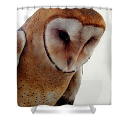 Shower Curtain featuring the photograph Young Barn Owl by Betty-Anne McDonald