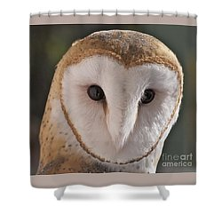 Young Barn Owl Shower Curtain