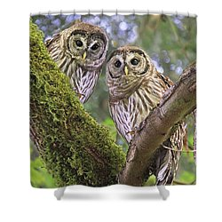 Young Barred Owlets  Shower Curtain