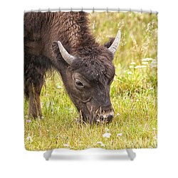 Young Bison Shower Curtain by Belinda Greb