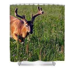 Shower Curtain featuring the photograph Young Buck by Eleanor Abramson