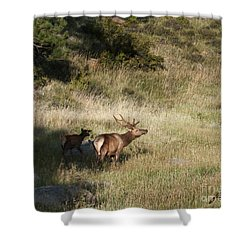 Young Bull Elk Shower Curtain