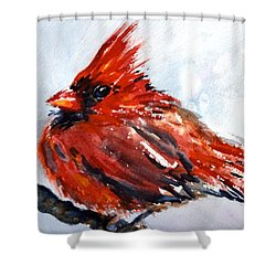 Young Cardinal Shower Curtain by Beverley Harper Tinsley