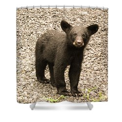 Young Cub Shower Curtain
