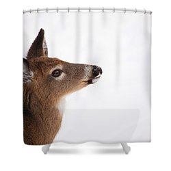 Young Deer In Winter Shower Curtain by Karol Livote