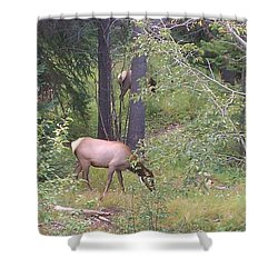 Shower Curtain featuring the photograph Young Elk Grazing by Fortunate Findings Shirley Dickerson