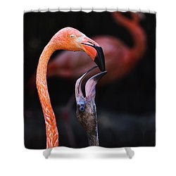 Young Flamingo Feeding Shower Curtain