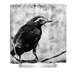 Young Grackle Shower Curtain by Cassie Peters