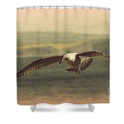 Young Gull Shower Curtain by Linsey Williams