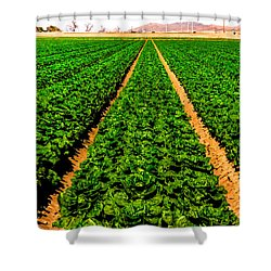 Young Lettuce Shower Curtain by Robert Bales