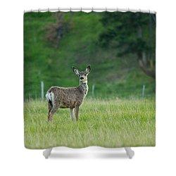 Young Mule Deer Shower Curtain by Eti Reid