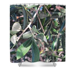 Young Olives Shower Curtain by Pema Hou