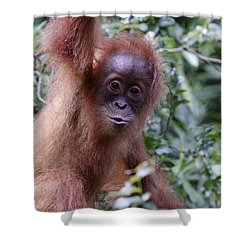 Shower Curtain featuring the pyrography Young Orangutan Kiss by Shoal Hollingsworth