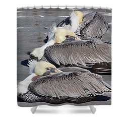 Young Pelicans Shower Curtain by Heidi Smith