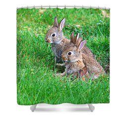 Young Rabbits Shower Curtain by Nick  Biemans