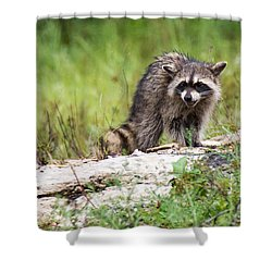 Young Raccoon Shower Curtain