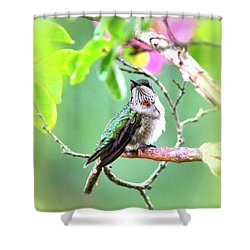 Young Ruby - 6761- 8x10 Shower Curtain