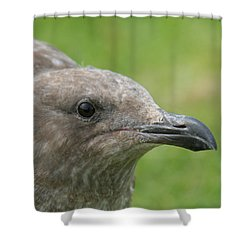 Young Seagull Shower Curtain by Bob and Jan Shriner