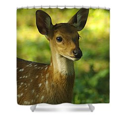 Young Spotted Deer Shower Curtain