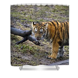 Young Tiger Shower Curtain by Thomas Woolworth