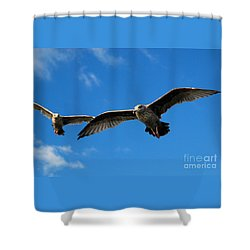 Young Wings Shower Curtain