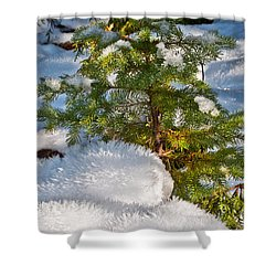 Young Winter Pine Shower Curtain