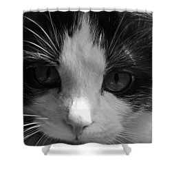 Shower Curtain featuring the photograph Yue Up Close by Andy Lawless