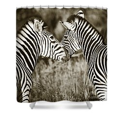 Shower Curtain featuring the photograph Zebra Affection by Liz Leyden