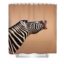 Zebra Calling Shower Curtain by Johan Swanepoel
