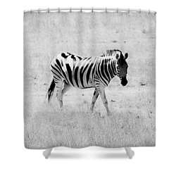 Zebra Explorer Shower Curtain by Melanie Lankford Photography