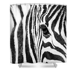 Zebra Gaze Shower Curtain
