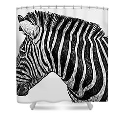 Zebra - Happened At The Zoo Shower Curtain by Jack Zulli