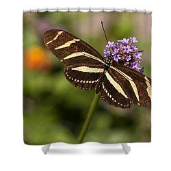 Zebra Longwing Butterfly Shower Curtain by Adam Romanowicz