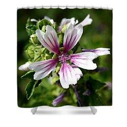 Zebra Mallow Shower Curtain by Tracey Harrington-Simpson
