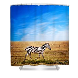 Zebra On African Savanna. Shower Curtain by Michal Bednarek