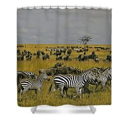 Zebras And Wildebeast   #0861 Shower Curtain
