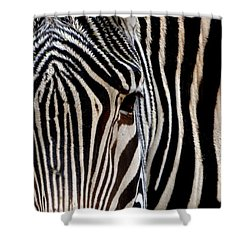 Shower Curtain featuring the photograph Zebras Face To Face by Nadalyn Larsen