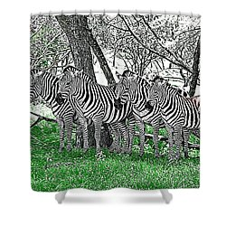 Shower Curtain featuring the photograph Zebras by Kathy Churchman