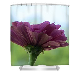 Zinnia Dream Shower Curtain by Sonali Gangane