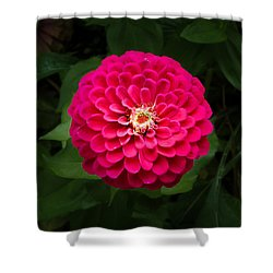 Zinnia In Bloom Square Shower Curtain