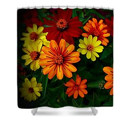 Shower Curtain featuring the photograph Zinnia Kaleidoscope Of Color by Nick Kloepping