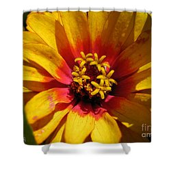 Zinnia Named Swizzle Scarlet And Yellow Shower Curtain by J McCombie