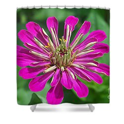 Shower Curtain featuring the photograph Zinnia Opening by Eunice Miller