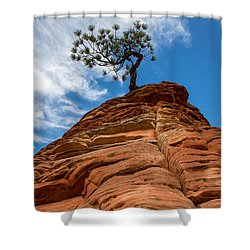 Zion Cypress Shower Curtain by John Daly