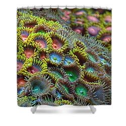 Zoanthids Shower Curtain