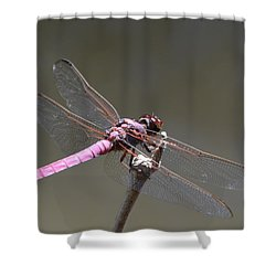 Zootography2 Pink Dragonfly Shower Curtain by Jeff at JSJ Photography