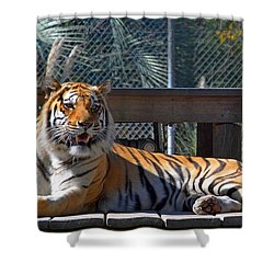 Zootography3 Tiger In The Sun Shower Curtain by Jeff at JSJ Photography