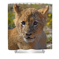 Zootography3 Zion The Lion Cub Shower Curtain by Jeff at JSJ Photography