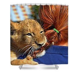 Zootography3 Zion The Lion Cub Likes Redheads Shower Curtain by Jeff at JSJ Photography